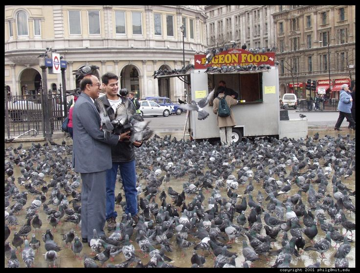 """""""In cities, pigeons have no natural enemies—just half-hearted efforts to eradicate them or at least shoo them from the places where they are most annoying. Plus, people love to feed them—especially tourists, children and little old ladies. And pigeons aren't picky! In addition to their natural diet, they even love popcorn and peanuts. Besides, """"hustle and bustle"""" doesn't apply to pigeons: They don't need to get to work on time."""""""