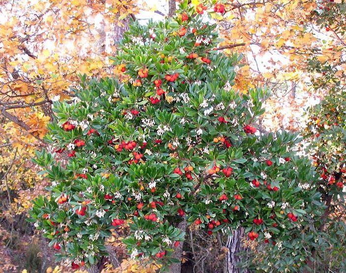 17 migliori immagini su cura delle piante e del giardino for Piante da frutto che resistono al freddo