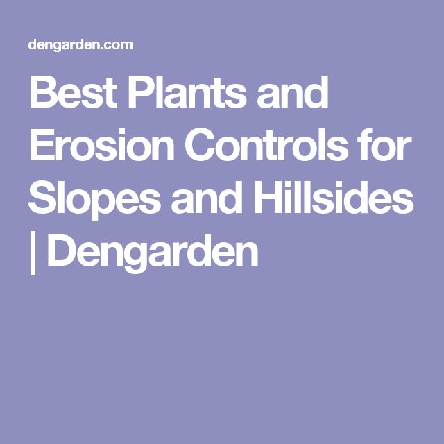 Best Plants and Erosion Controls for Slopes and Hillsides | Dengarden