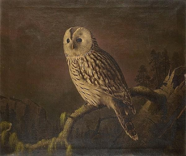 """A Ural owl perching on a branch"",  Ferdinand von Wright (1822-1906)"