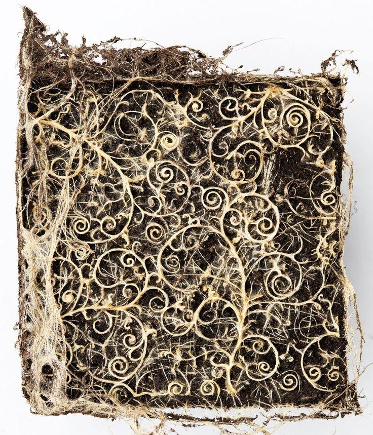 植物の根を「調教」し、幾何学模様を描かせたアート作品 | 植物の根で幾何学模様をつくるドイツ人アーティスト、ダイアン・シェーラー。彼女の作品は、人が自然を従わせるとはどういうことなのかを教えてくれる。
