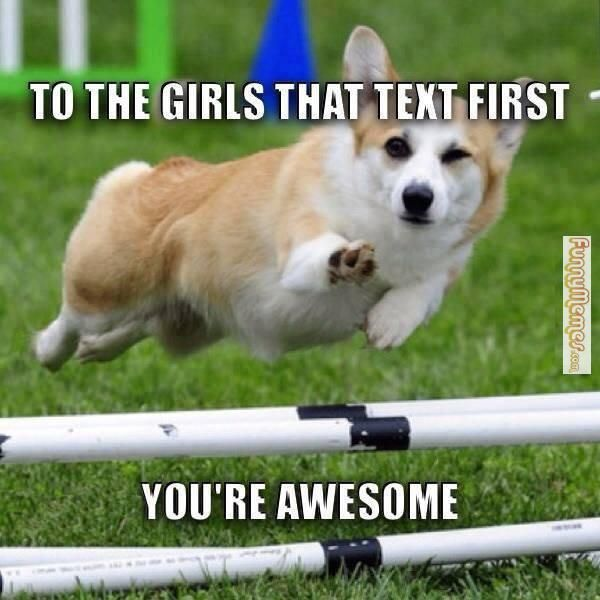 You Re Awesome Funny Memes : Best images about animal memes on pinterest funny