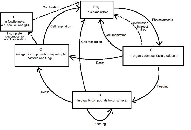 Ib Biology Notes 5 2 The Greenhouse Effect Draw And