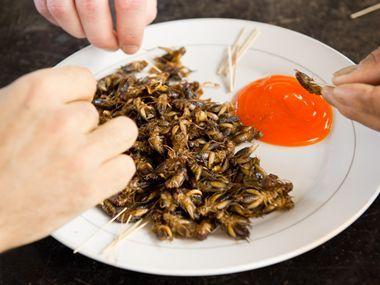 Grilli, cavallette, formiche in tavola