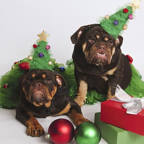 Pet portraits. Because you can't have a family photo and not include your furbabies! Bring in the whole family for your holiday pictures. The more the jollier! Click the image to take a look at some more portrait inspiration.