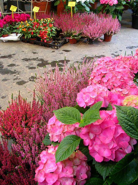 Flower market on Ile de la Cite, Paris