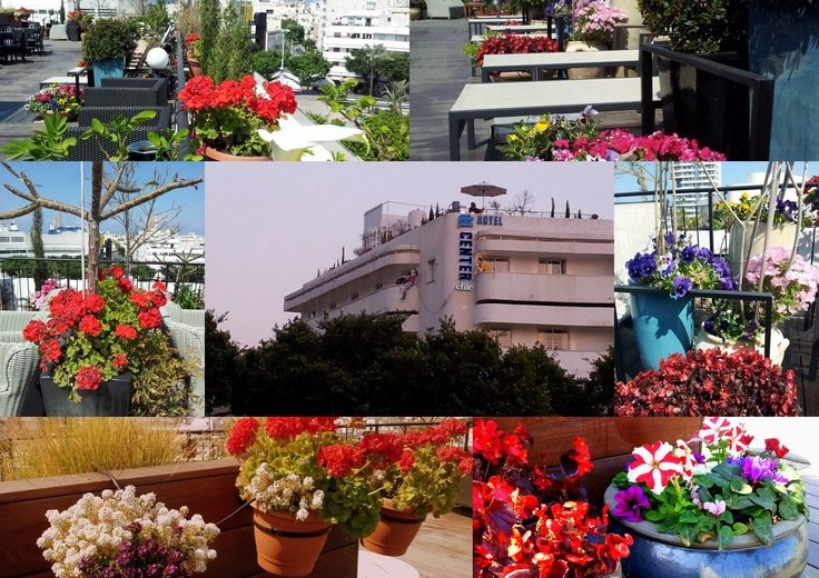 Spring flowers on the roof of Center Chic Hotel, Tel Aviv. www.atlas.co.il