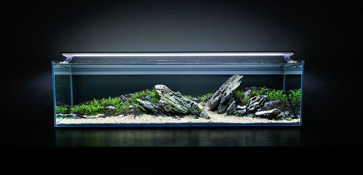 ... Aquascape Aquariums, Aquascapes Aquariums, Aquarium Ideas, Aquascape