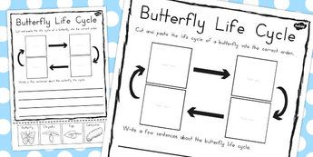 Butterfly Life Cycle Sentence Writing Activity Sheet - australia