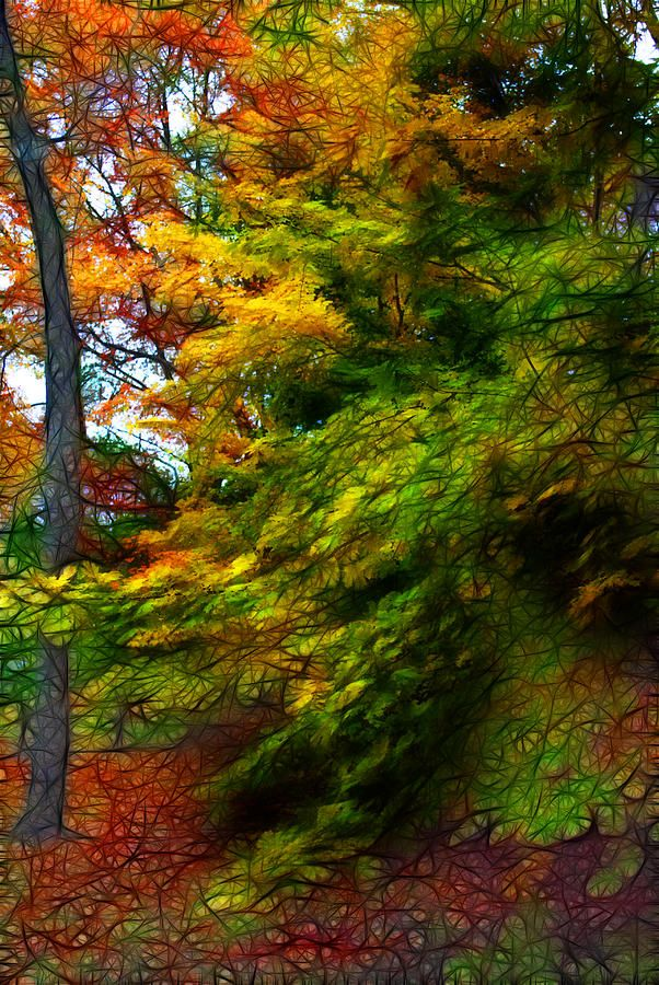 Fall Color Abstract 1 by Cindy Boyd