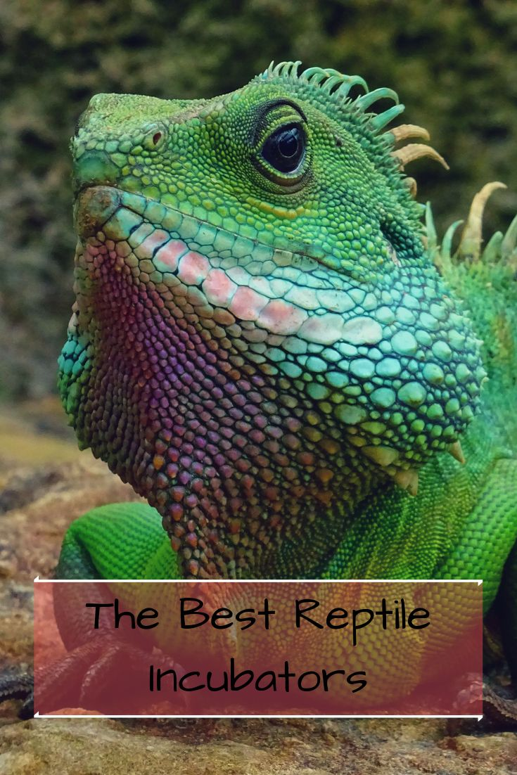 The Best Reptile Incubator 7 TopSelling Products