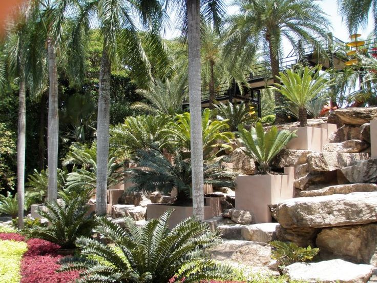 29 best images about cycads on pinterest gardens for Cycas landscape design