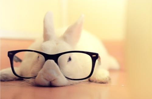 rabbit: Rabbit, Animals, Pet, Glass, Funny, Adorable, Things, Bunnies