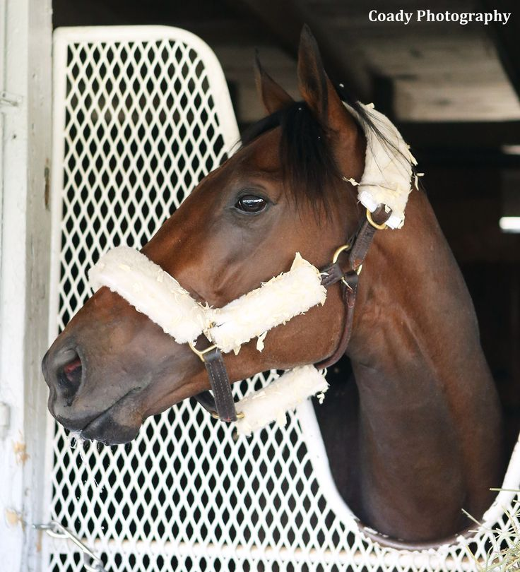 Nyquist is winner of April 2, 2016 Xpressbet.com Florida Derby (G1). The undefeated 3-yr old favorite for the Kentucky Derby. Nyquist arrived at Keeneland April 3 to ready for KY.Derby