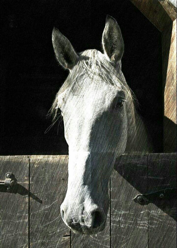 Cavalo Branco-03