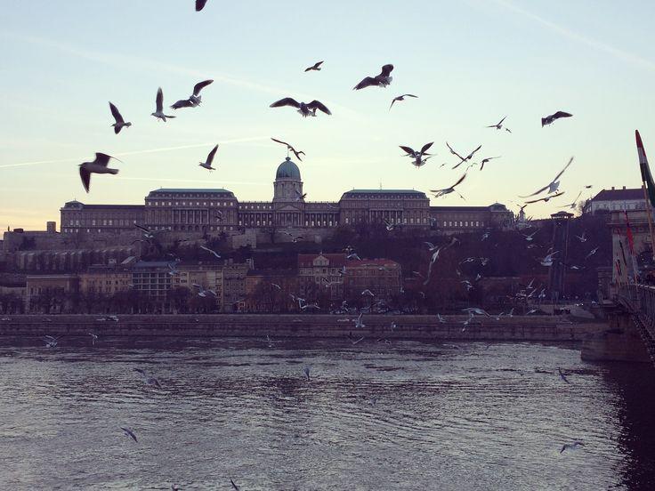Budapest 👌🏼