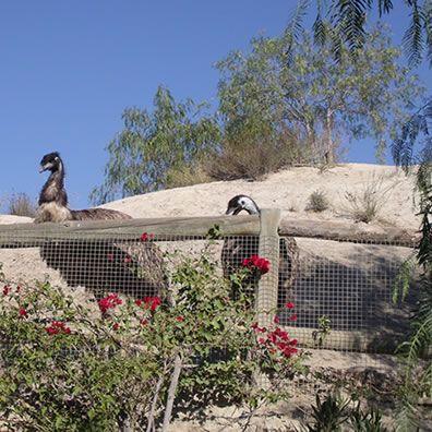 Senda de Naturaleza - a nature walk through the Oasys Safari Park in the Almeria desert of Tabernas...