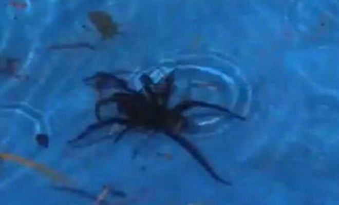 Kids Scream For Help As Deadly Spider Found In Paddling Pool