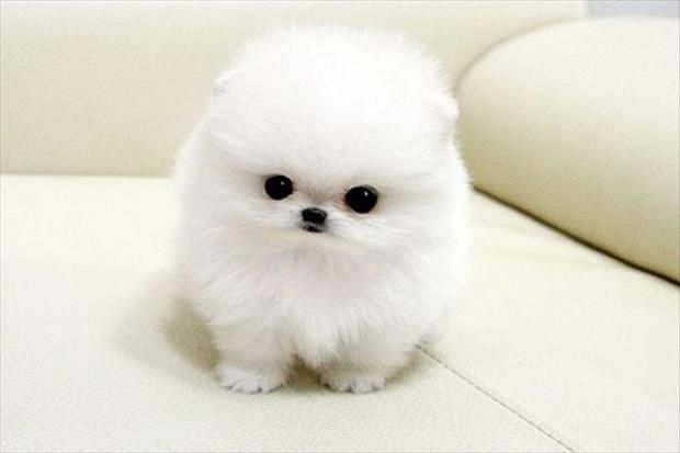 Dump A Day They're So FLUFFY!!! - 32 Pics