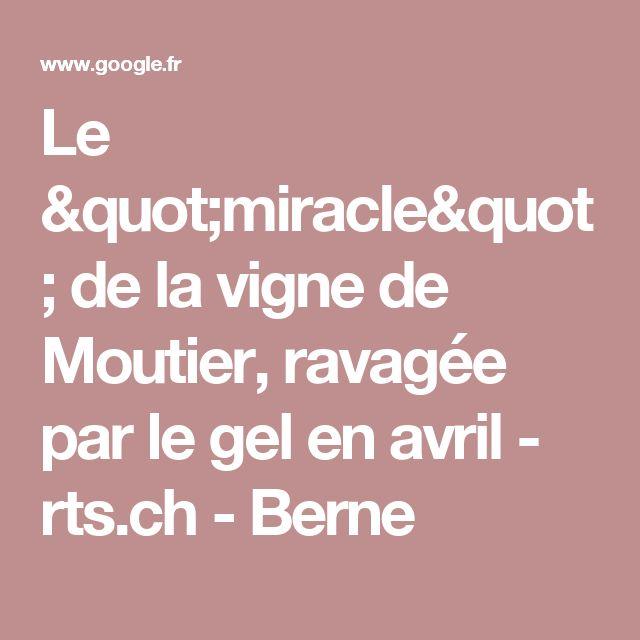 """Le """"miracle"""" de la vigne de Moutier, ravagée par le gel en avril - rts.ch - Berne"""
