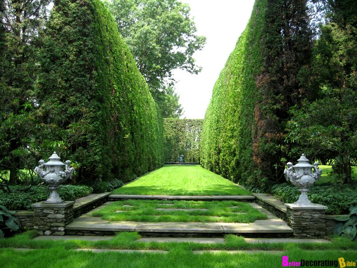 Bringing privacy to your backyard with hedges or shrubs for Privacy greenery