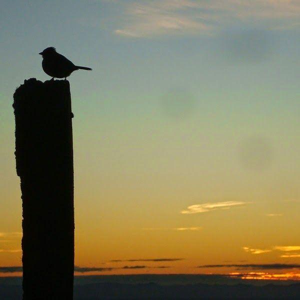 Birdwatching em Gonçalves, sul de Minas Gerais