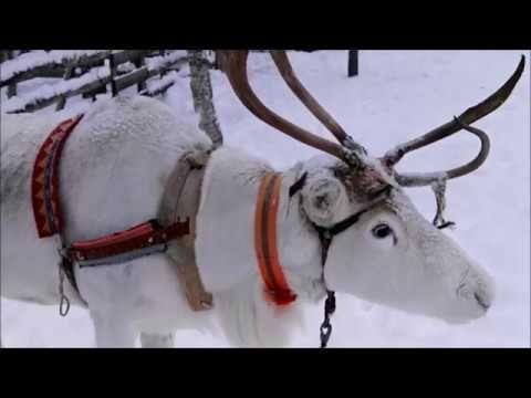 Granja de Renos en Saariselka Laponia Finlandesa