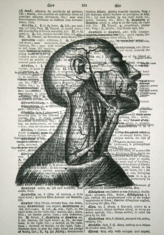$10  Anatomical Print on Vintage Latin Dictionary