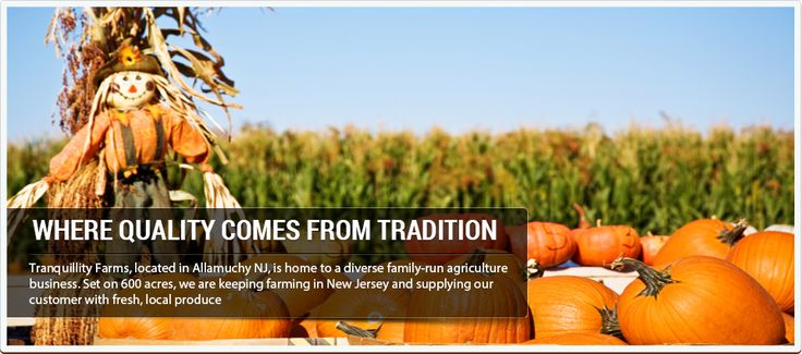 NJ Pumpkin Picking and Fall Fest at Tranquility Farms (Allamuchy)