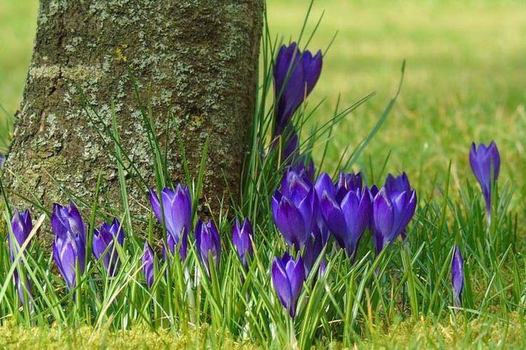 Wiosna coraz bliżej, a więc warto przygotować się na porządki w ogrodzie i na działce! http://eko-logis.com.pl/wiosenne-porzadki-w-ogrodzie-i-na-dzialce
