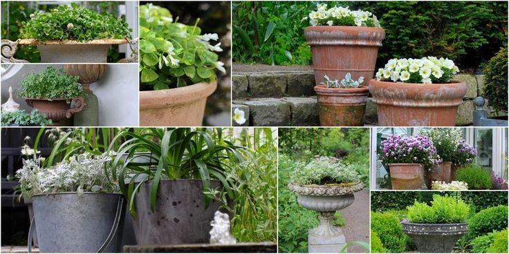 HAVEFOLKET: ROMANTISKE KRUKKER. Grønne vækster gør sig også altid. Mange vil synes det er kedeligt, men romantikken blomstrer på en eller anden måde tydeligere i selve haven, når krukkernes beplantning er rolig og afstemt. TEKST: MARIANNE FOTO: LENE, LONE, KARINA