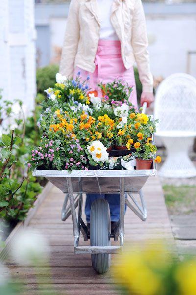 voorjaarsbloemen in kruiwagen #wheelbarrow #spring