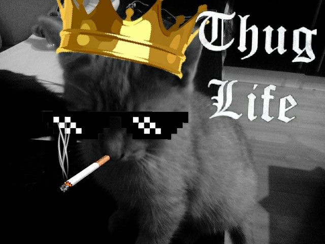 My cat is thug live