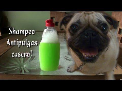 Como Hacer un Shampoo antipulgas Casero - YouTube