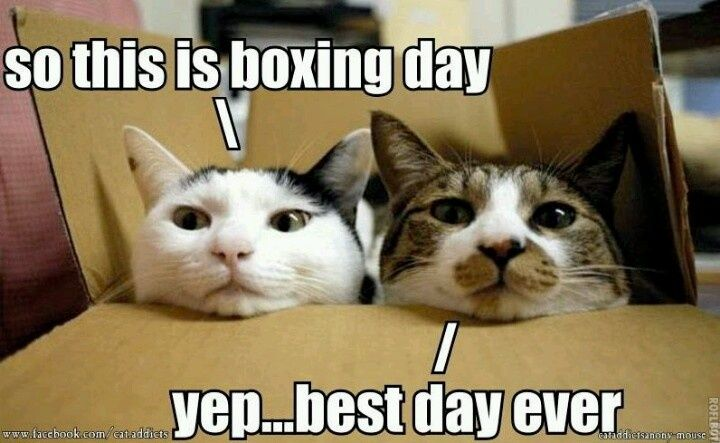 """These guys really understand Boxing Day. lol Boxing Day is traditionally the day following Christmas Day, when servants and tradesmen would receive gifts from their bosses or employers, known as a """"Christmas box. Cherokee Billie"""