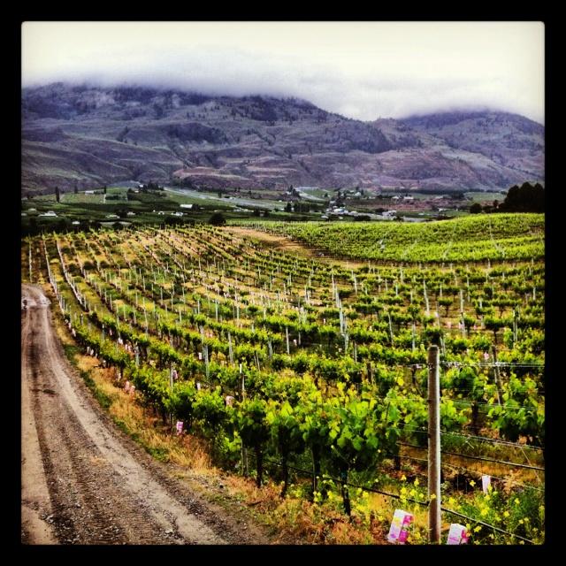 Black Hills Winery  Oliver, BC