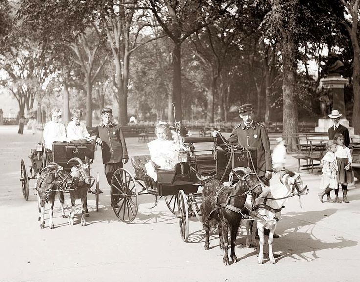 America's Gilded Age - Teenage boys wearing working uniforms while operating goat carts. Well dressed children riding in the goat carriages. Located in Central Park, NYC - c.1900. ~ {cwlyons}