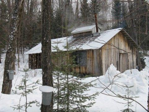 cabane à sucre dans le bois