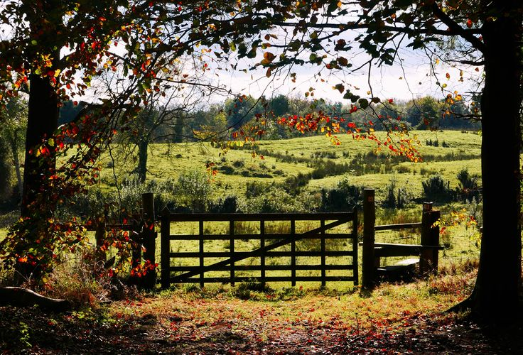 A view from Rowallane, a National Trust property near Saintfield, Co Down.