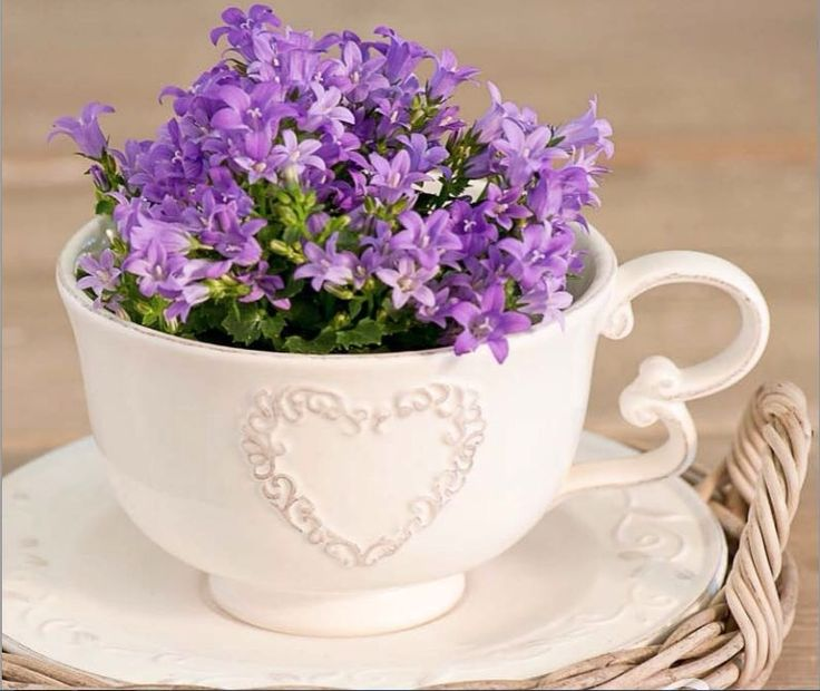 15 Best Images About Flowers In A Cup On Pinterest