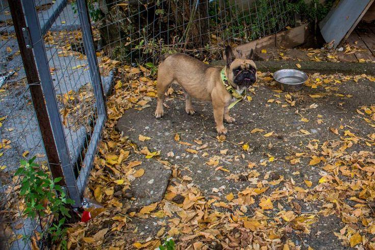 Μην με βλέπεις κοντόχοντρο και άγριο... είμαι αγαπησιάρης και πολύ χαδιάρης! #arive #photo #10_12_2013 #dog http://ow.ly/rCNCV