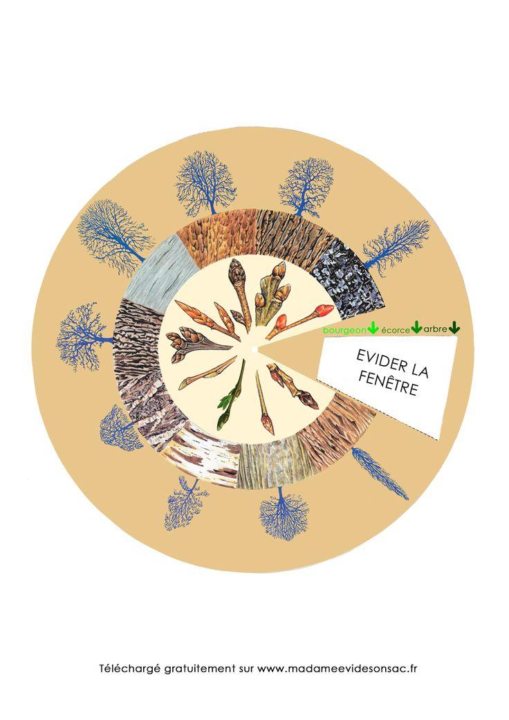 Madame E. vide son sac: Activité nature - découvrir les arbres