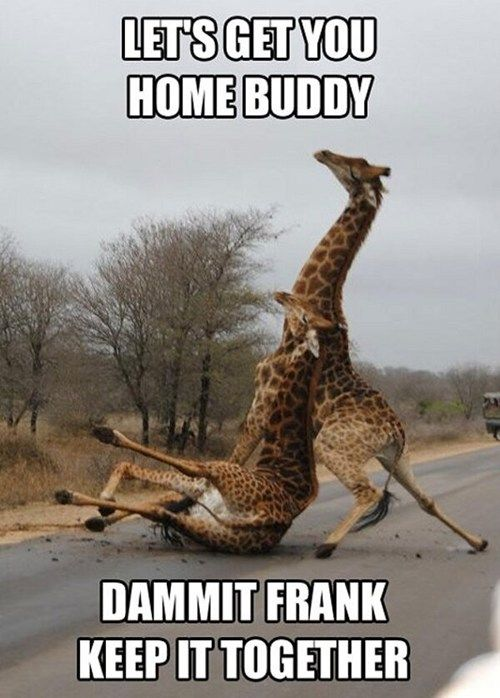 When I drink, I'm about as coordinated as a giraffe who's been shot in the ass with a tranquilizer...