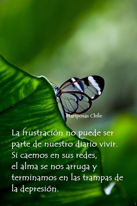 Ayudando a otras personas a ser felices, nosotros también llegamos a ser felices.www.facebook.com/mariposasgruporenacer