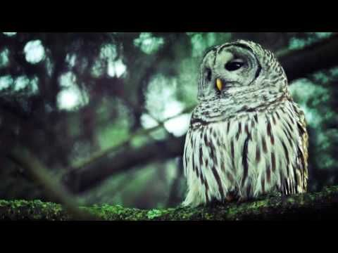 Alan Parsons Project Old And Wise Extended Saxophone Solo In