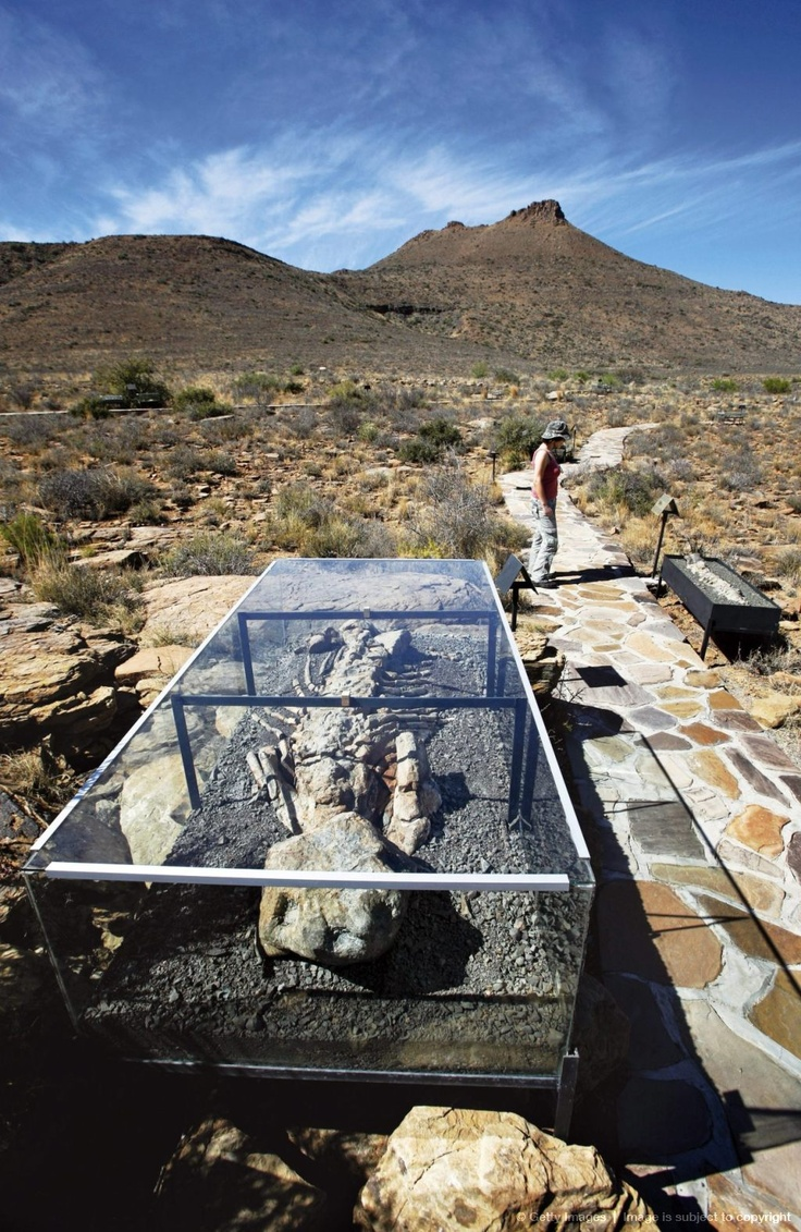 Discover South Africa's Karoo National Park