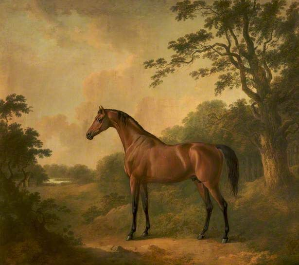 A Bay Hunter Named 'Sir Oliver', c.1808 By John Boulbee