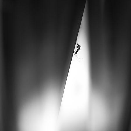 moustique, ombre, feuille, Eric Dincuff photographe