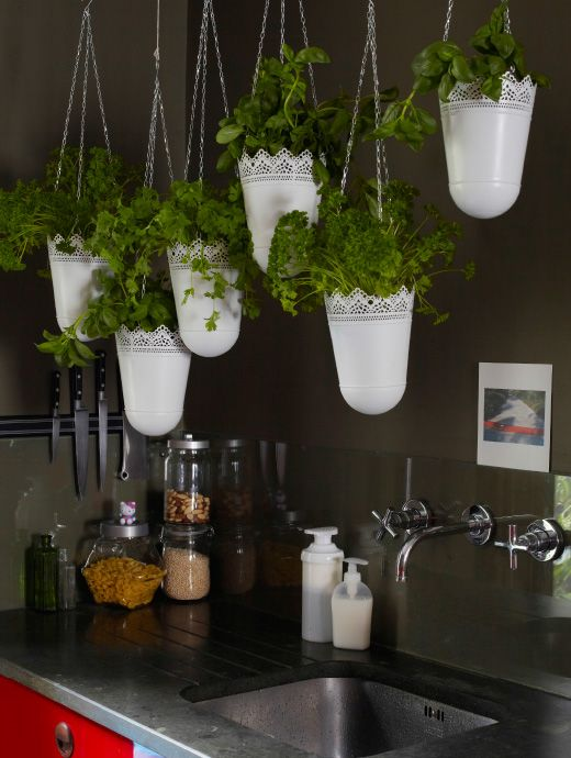 Grow a hanging herb garden! If you have no outdoor space and a small kitchen, hanging plants by a wall or window is a great way to add some greenery.