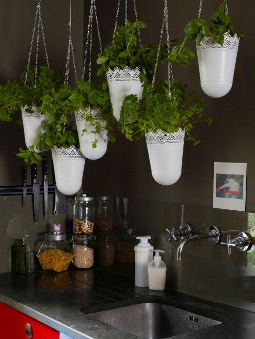Billede af SKURAR hængende ampler fyldt med krydderurter over en køkkenvask.